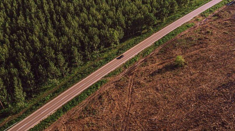 Skövling av skog