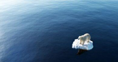 Företag är en del av den globala uppvärmningen hållbarhet och problemhantering för företag
